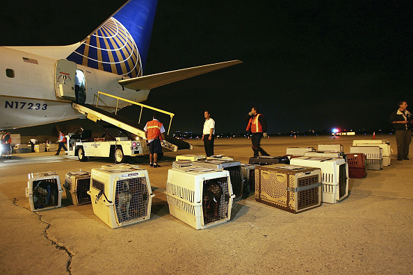 LAX Airport「Rescue Flights Bring Animal Victims Of Katrina Out Of Gulf Coast」:写真・画像(2)[壁紙.com]