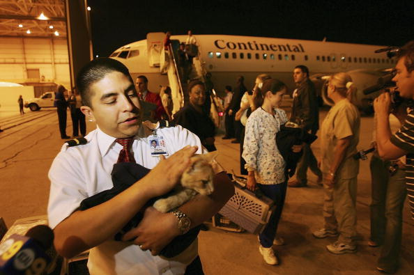 LAX Airport「Rescue Flights Bring Animal Victims Of Katrina Out Of Gulf Coast」:写真・画像(15)[壁紙.com]
