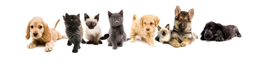 シャムネコ「猫と犬」:スマホ壁紙(13)
