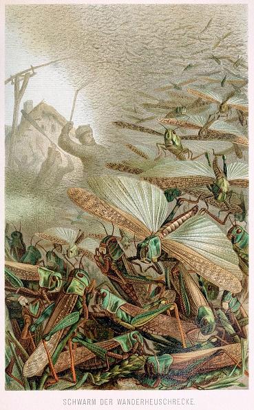 Lithograph「A Swarm Of Locusts」:写真・画像(16)[壁紙.com]