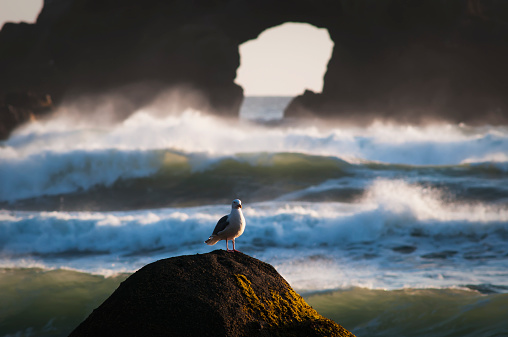 Cannon Beach「A Gull Rests On A Rock At Ecola State Park」:スマホ壁紙(18)