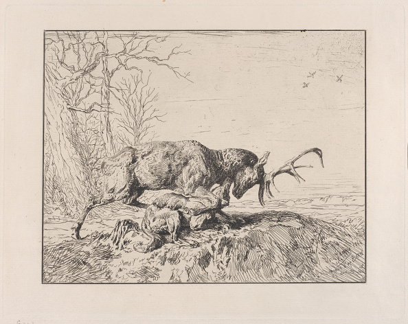 Animal Body Part「Stag Fighting A Wolf」:写真・画像(8)[壁紙.com]