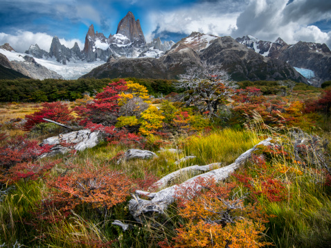 Log「Mt Fitz Roy in colorfull Autumn vegetation」:スマホ壁紙(17)