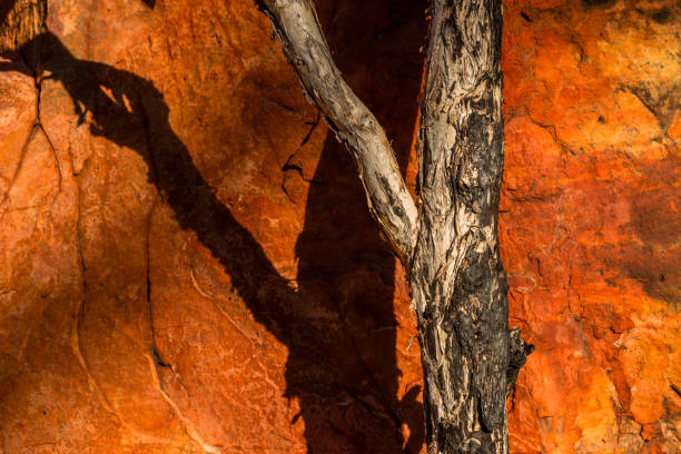 Limmen National Park, Northern Territory, Australia.:スマホ壁紙(壁紙.com)