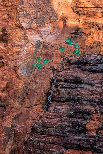 Arafura Sea「Limmen National Park, Northern Territory, Australia.」:スマホ壁紙(5)