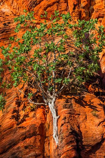 Arafura Sea「Limmen National Park, Northern Territory, Australia.」:スマホ壁紙(14)
