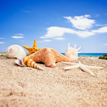カタツムリ「ハッピー starfishes ご友人とご一緒にビーチでの貝殻」:スマホ壁紙(3)