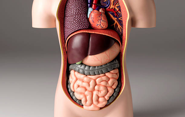 Stomach pain model:スマホ壁紙(壁紙.com)
