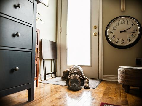 Depression - Sadness「COVID-19, No dog walks during lockdown」:スマホ壁紙(7)