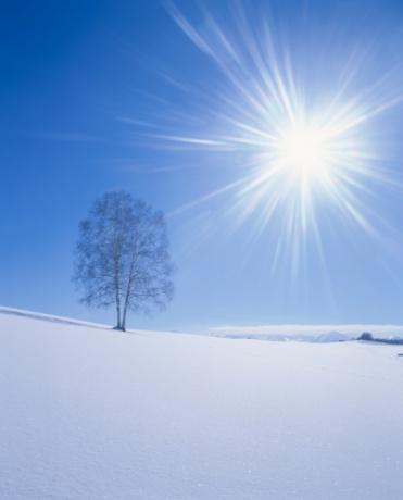 星空「The Sun Shining Over Bare Trees in a Snowy Field. Biei, Hokkaido, Japan」:スマホ壁紙(8)
