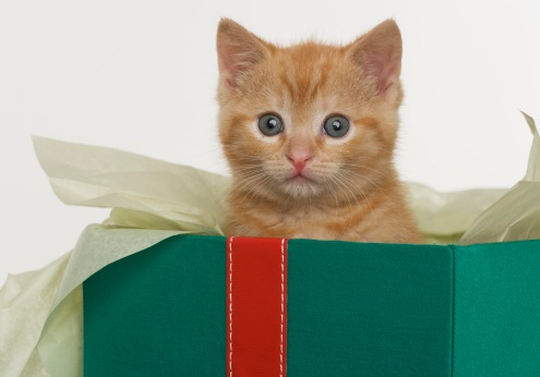 One Animal「Kitten peeking out of gift box」:スマホ壁紙(17)
