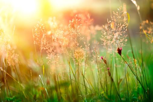 Dew「Sunset grass」:スマホ壁紙(19)