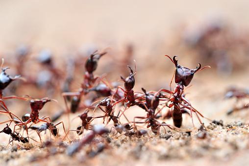 Walking「Army Ants in Lake Mburo National Park, Uganda」:スマホ壁紙(4)