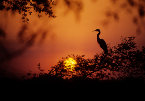 Rajasthan「Egret at Dusk」:スマホ壁紙(8)