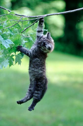 Kitten「Kitten Hanging from a Branch」:スマホ壁紙(18)