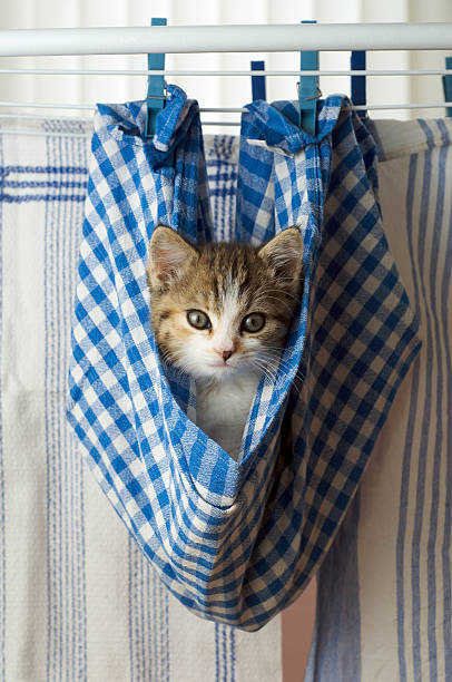 Kitten hanging on a washing line in a dishcloth:スマホ壁紙(壁紙.com)