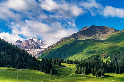 Pasture「Scenery of grassland in Xinjiang」:スマホ壁紙(1)