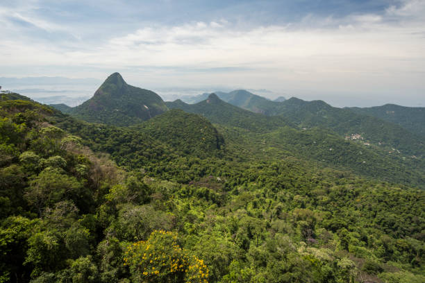 Scenery of forest and mountains, Tijuca Forest National Park, Rio de Janeiro, Brazil:スマホ壁紙(壁紙.com)