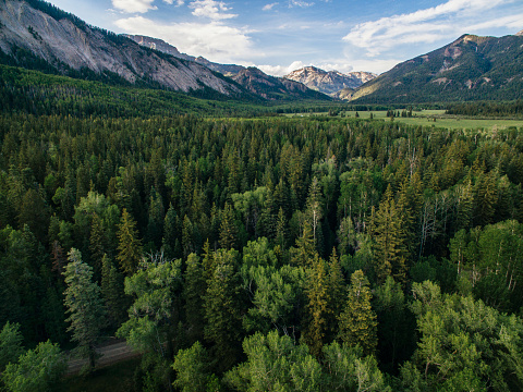 San Juan Mountains「Scenery of forest and mountains, Blanco Basin, San Juan Mountains, Pagosa Springs, Colorado, USA」:スマホ壁紙(19)
