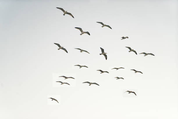 Seagulls:スマホ壁紙(壁紙.com)
