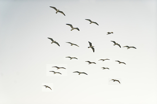 Flock Of Birds「Seagulls」:スマホ壁紙(11)