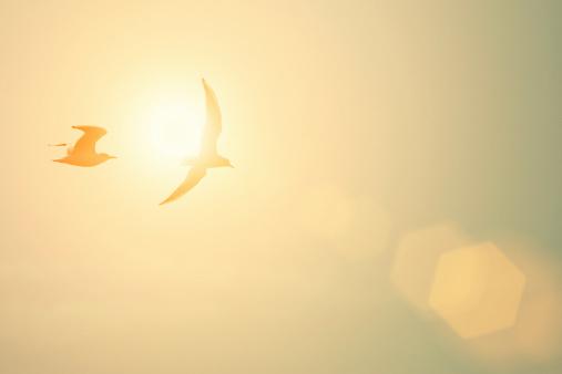 鳥「とかもめ」:スマホ壁紙(5)