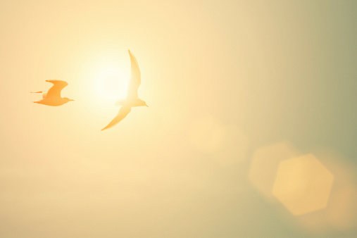 Birds「とかもめ」:スマホ壁紙(4)