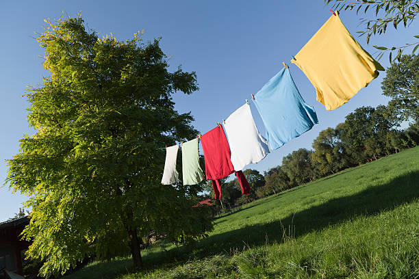Clothesline with multi colored t-shirts between trees (XXXL):スマホ壁紙(壁紙.com)
