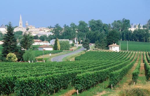 Nouvelle-Aquitaine「Saint Emilion, wine country vineyards.」:スマホ壁紙(15)