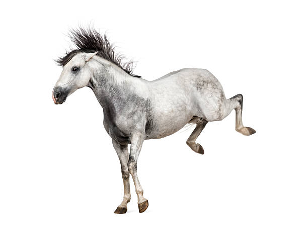 Andalusian horse kicking out:スマホ壁紙(壁紙.com)