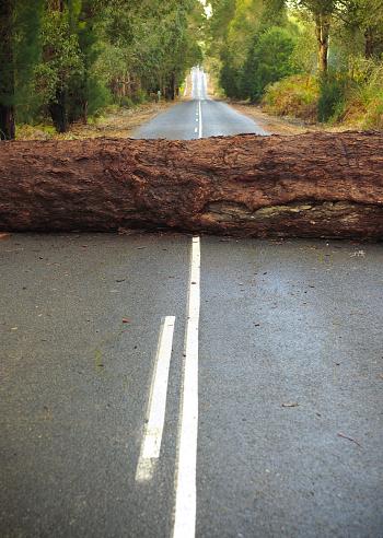 Problems「Tree Blocking the Road」:スマホ壁紙(4)