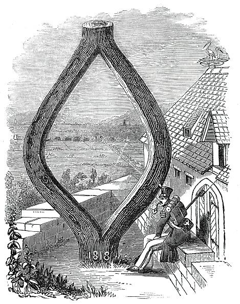 Single Tree「Curious Oak At Baden-Baden」:写真・画像(6)[壁紙.com]
