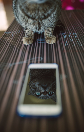 トラ猫「Mirror image of cat on display of smartphone」:スマホ壁紙(10)