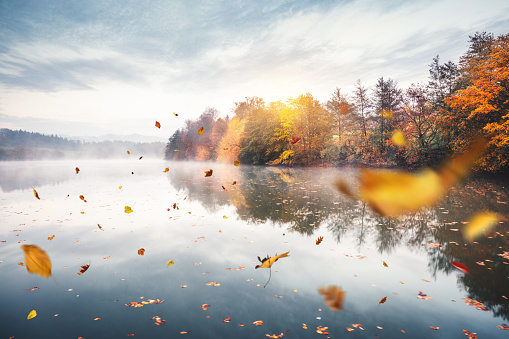 Floating On Water「Flying Autumn Leaves」:スマホ壁紙(7)