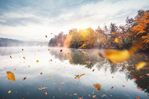 Tree「Flying Autumn Leaves」:スマホ壁紙(7)