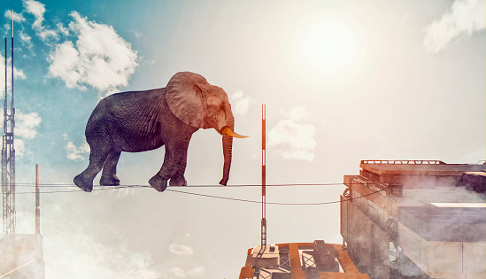 Courage「Concept image of elephant walking on rope between two buildings」:スマホ壁紙(19)