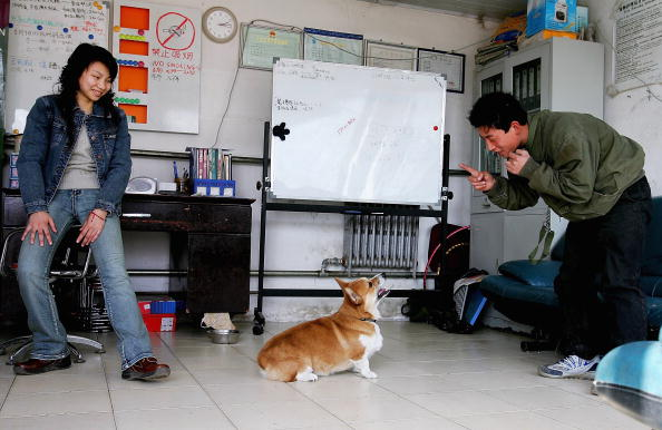 Sports Training「Dogs Are Trained At A Dog School In Beijing」:写真・画像(3)[壁紙.com]