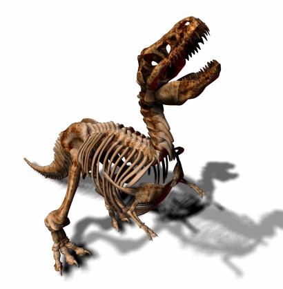 Animal Skeleton「T_Rex_080703_3」:スマホ壁紙(15)