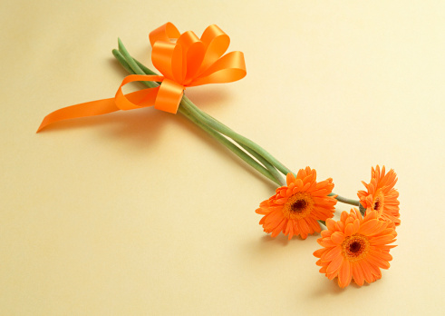 flower「Gerbera」:スマホ壁紙(8)
