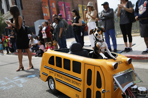 School Bus「L.A. Archbishop Jose Gomez Leads Annual Blessing Of The Animals」:写真・画像(11)[壁紙.com]