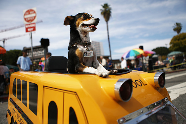 School Bus「L.A. Archbishop Jose Gomez Leads Annual Blessing Of The Animals」:写真・画像(17)[壁紙.com]