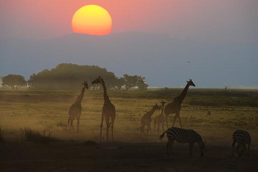 Giraffe「Giraffe」:スマホ壁紙(8)