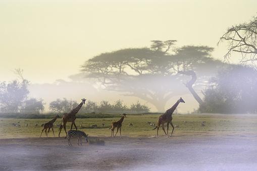 Giraffe「Giraffe」:スマホ壁紙(7)