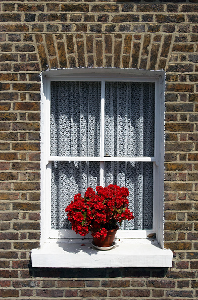 Wall - Building Feature「Flower pot on a window sill.」:写真・画像(7)[壁紙.com]