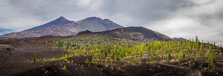 Volcano Islands「Volcano Mount El Teide, Pico Viejo and Montaña de la Botija, viewed from Montaña Samara, El Teide National Park, Tenerife, Canary Islands, Spain」:スマホ壁紙(11)