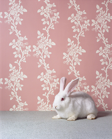 sumona「White rabbit (Oryctolagus cuniculus sp.) in front of floral wallpaper」:スマホ壁紙(15)