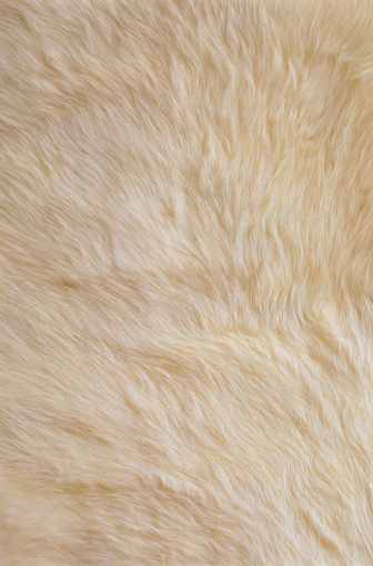 動物の毛「White Rabbit Fur」:スマホ壁紙(11)
