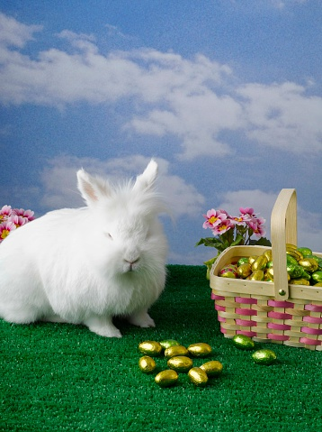 Easter Basket「White rabbit and basket of chocolate Easter eggs」:スマホ壁紙(18)