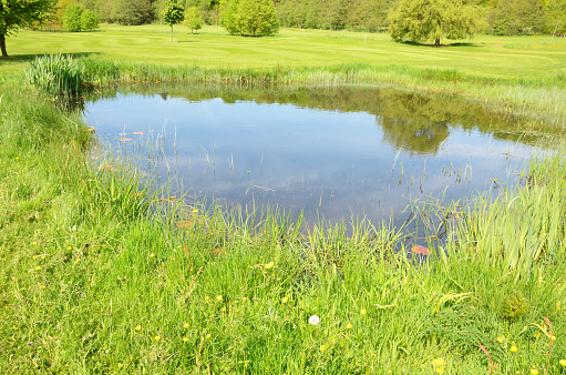 Uncultivated「Small pond in the middle of a green field with long grass」:スマホ壁紙(16)