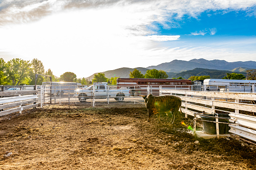 Horse「Rodeo Animals in a yard」:スマホ壁紙(6)